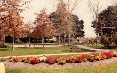 Harleston Park 1982